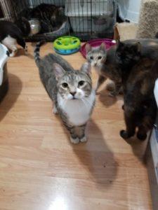 More Rescue Cats K-Z - Cypress Feline Rescue